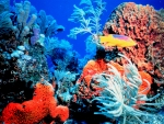 Bright Colorful Coral Reef