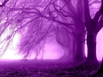 Purple morning in the forest