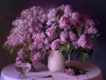 beautiful purple lilacs
