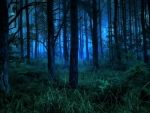 Foggy Forest Night