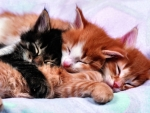 Photo of Kittens F1C