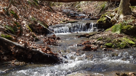 Forest Stream in Spring - Stream, Spring, Forest, Nature