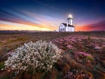 Lighthouse in Flowery Landscape at Sunset