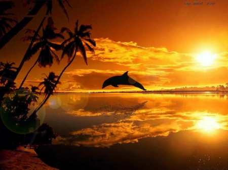 Dolphin Sunset - sea, sun, sky, beach, palms
