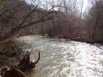 Shiny Mohican River in Spring