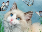 Blue Eyed Kitten and & Butterflies