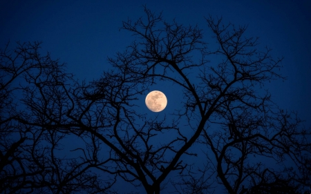 full moon thru the trees - cool, space, trees, moon, fun