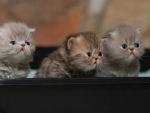 three sweet kittens