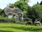 horses by the cottage