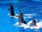 cute dancing dolphins