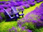 Rest in lavender field