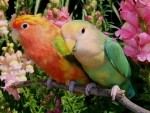 Colorful Parrot Couple