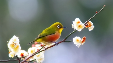 Beautiful Bird - animals, nature, branch, bird