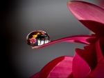Magical Dew Drop