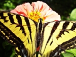 a yellow and black butterfly