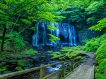 Beautiful forest waterfall