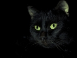 Green Eyed Black Cat