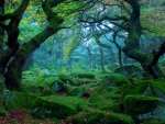 Enchanted Moss Forest