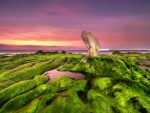 Mossy Sea Rocks under Twilight Sky