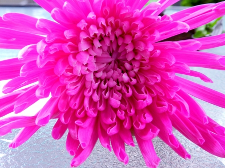 Flower In Neon Pink - Macro, Nature, Photography, Neon Pink, Flower, Summer