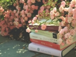 books in garden of pink roses