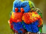 Small colourful parrots