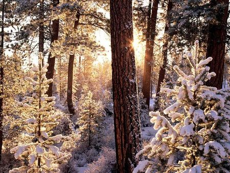 Winter`s fairytale - winter, snow, tree, sun, dom, snowly