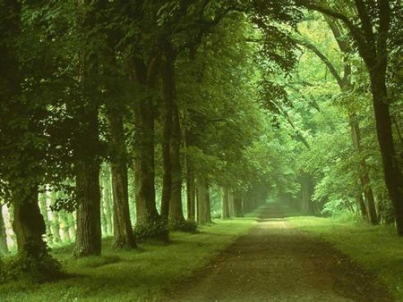 Deep Green Forest - vivaldi, forest, trees