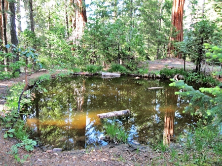 burns pond - forest, pond, reflection, trees