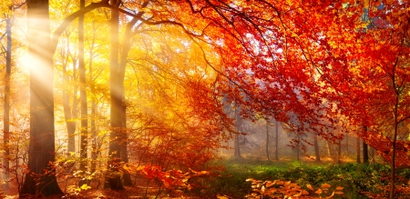 Autumn gold - branches, gold, foliage, glow, forest, trees, light, sunshine, sunlight, rays, morning, autumn, beautiful, park, fall