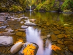 Small Waterfall Pond