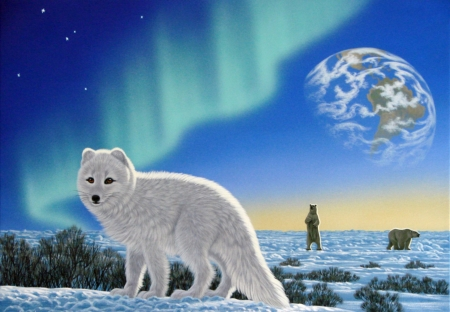 White Fox And Bears - Animals, Bears, White, Fox
