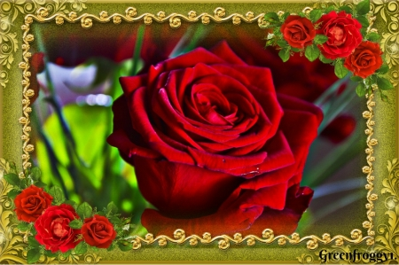 PRETTY RED ROSE - FRAMED, ROSE, PRETTY, RED