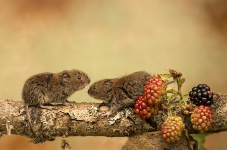 Mice - fruits, mice, animals, branch