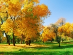 Yellow Trees on a Green Glade