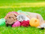 sleeping cute friends