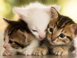 Cute Three Kittens
