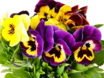 A Bouquet of Pansy Flowers