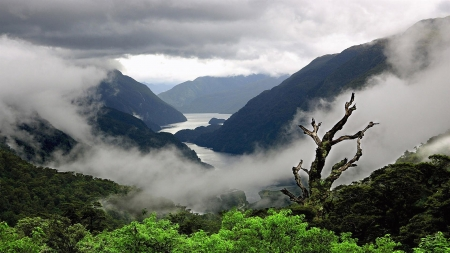 Fog With Mountains - mountains, nature, trees, river, sky, fog