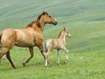 Young Horse And Mother