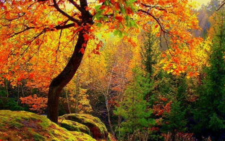Autumn Forest - forest, nature, trees, autumn, yellow