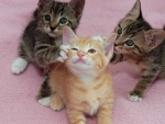cute playing kittens