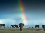 Afternoon on the African Plains