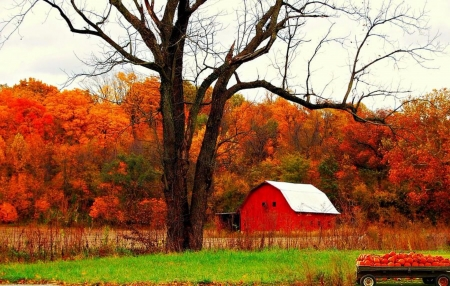 Autumn In Indiana - Nature, Autumn, Indiana, Barn, Forests, Trees