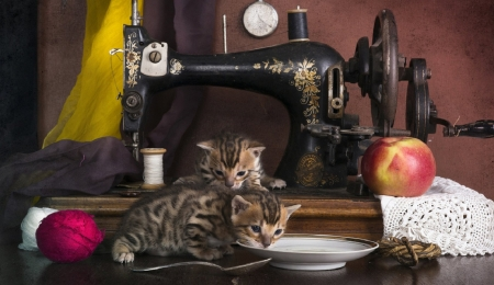 cute working kittens - cute, kittens, animals, cats, working