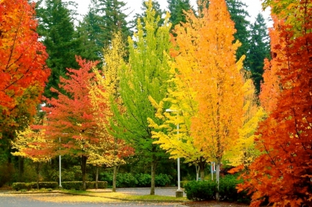 Colorful Leaves And Trees - Nature, Colorful, Trees, Forests, Leaves
