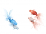 red blue goldfish