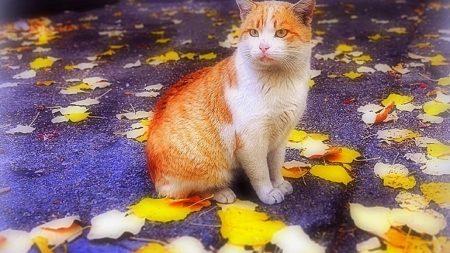 Cat in the Autumn - leaves, cat, autumn, animal, fall season