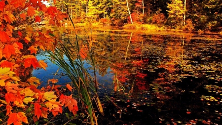 Autumn Lake - water, lake, trees, season, forest, nature, autumn, fall, leaves