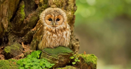 baby owl - owl, tree, rock, bird, grass